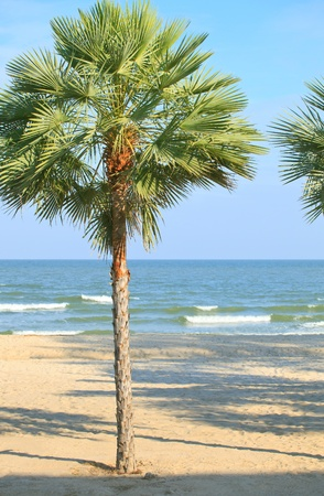 palm tree on sea beach Stock Photo - 12329408