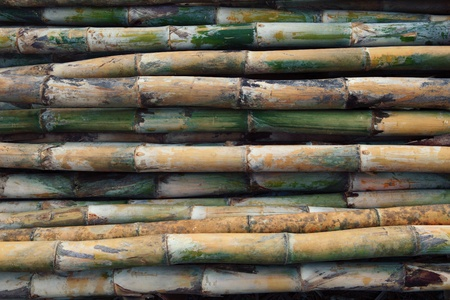 fresh bamboo for multipurpose photo