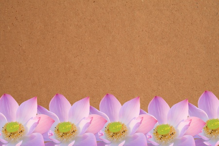 pink lotus and recycle paper background photo