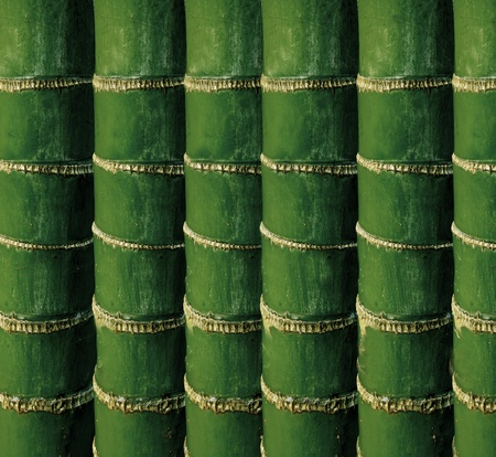 droop: green bamboo tree body use as background Stock Photo