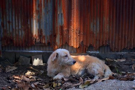 perro asustado: la calle del perro en el campo del suelo