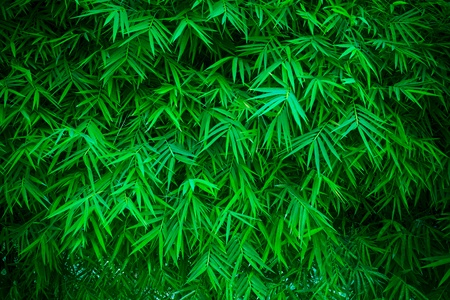 green bamboo leaves background photo