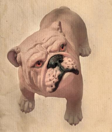 pitbull: bull dog and paper texture Stock Photo