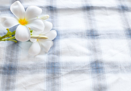 frangipani flower on clothes background and space for fill text photo