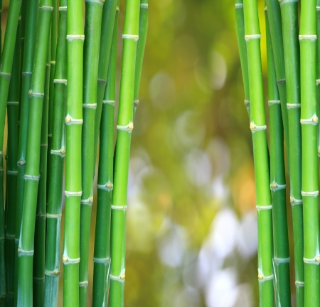 green bamboo backgroound and bogeh photo