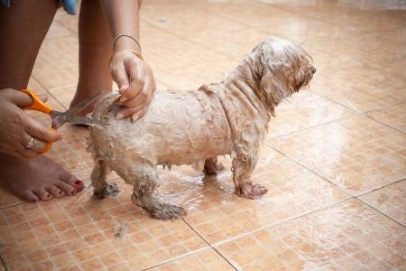 washing dog at home on holiday photo
