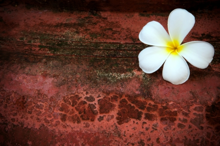 frangipani flower on old red grunge texture background Stock Photo - 13680893