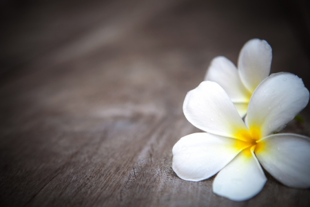 white  frangipani flowers on brown  wood texture with fresh dew water  photo