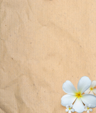 old paper texture  with frangipani flowers use as background Stock Photo - 13683096