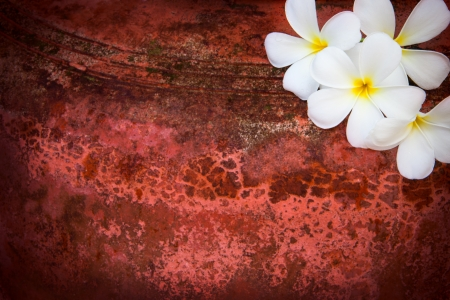 exoticism: white frangipani flowers on red grunge background vignete light