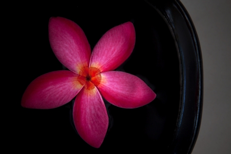 red frangipani flower floating in black ceramic bowl Stock Photo - 13724636