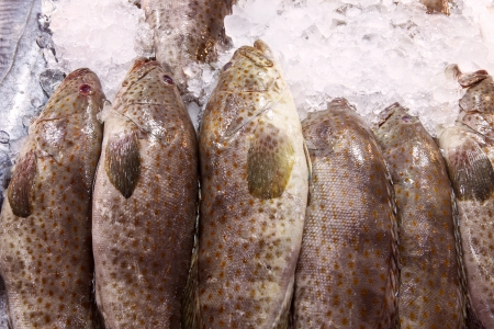 fresh grouper fish for sale in fresh market photo