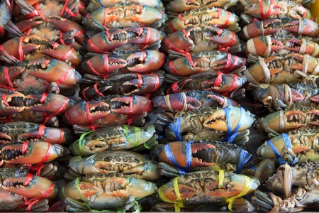 live crab ready for sale to be cooking  Stock Photo - 13810216