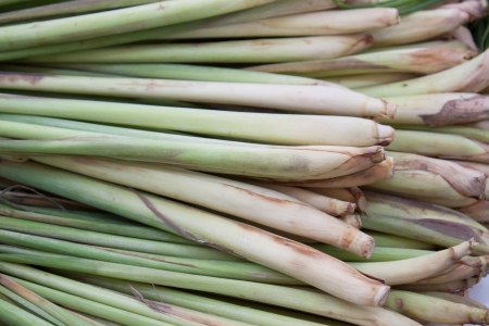 Bunches of Lemon Grass  photo