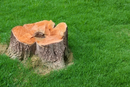 tree stump and green grass field manage photo