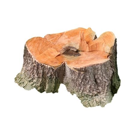 sequias: tronco de árbol aislado blanco Foto de archivo
