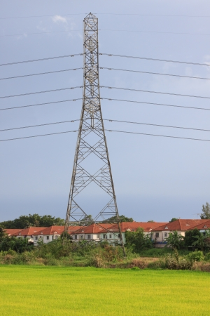 high voltage wire  tower  and yellow paddy field photo