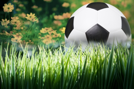 soccer football on green grass and flower background photo