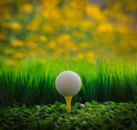 golf balls: golf ball on green grass field and yellow blur background Stock Photo