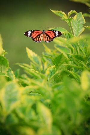 butterfly on green tree photo