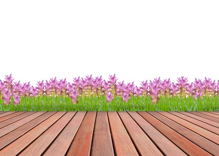 pink siam tulip garden and wood terrace texture photo