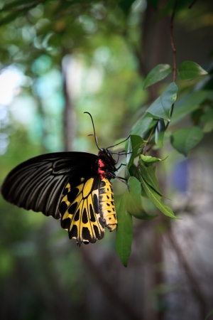 perceptual: yellow butterfly on green tree leaves Stock Photo