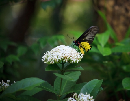 perceptual: yellow butterfly on whtie flower and  green tree leaves