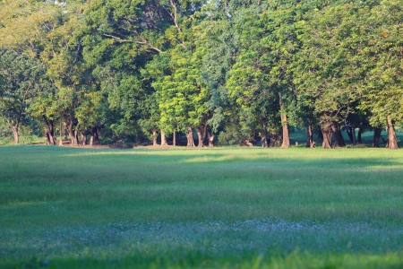 land scape: land scape of green park and grass field