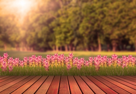wood terrace and tulip flower with green tree plant background photo