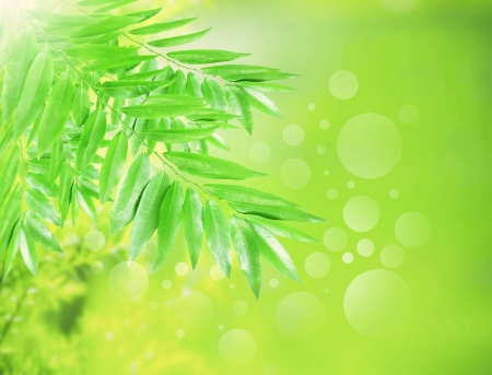 green leaves with beautiful blur and bouquet background