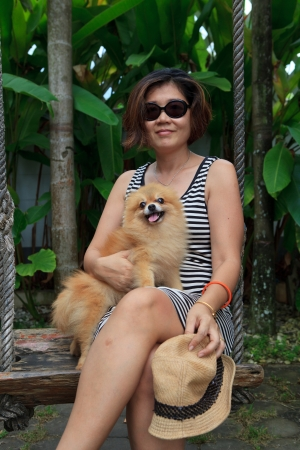 hairy adorable: pomeranian dog sitting on woman leg  Stock Photo