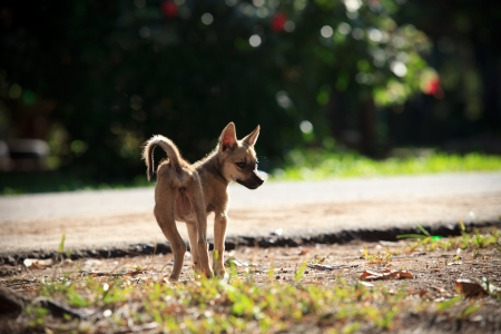 street dog standing on soil ground Stock Photo - 16082248