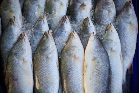 fischerei: Silber perc Weiß Barsch Fisch frisch auf dem Markt Lizenzfreie Bilder