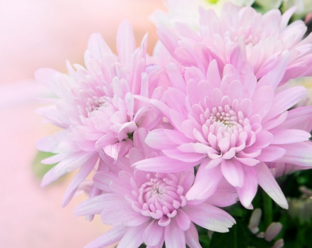 beautiful flower with high key technic photography Stock Photo - 16164582