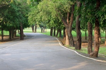 oxigen: tree plant and asphalt way in public park  Stock Photo