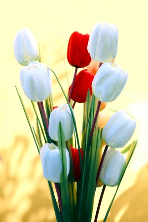 white and red tulip flowers with yellow background Stock Photo - 16543072