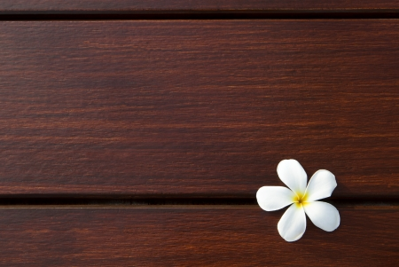 file of frangipani flower on wood texture background use as spa or natural background backdrop Stock Photo - 17101787