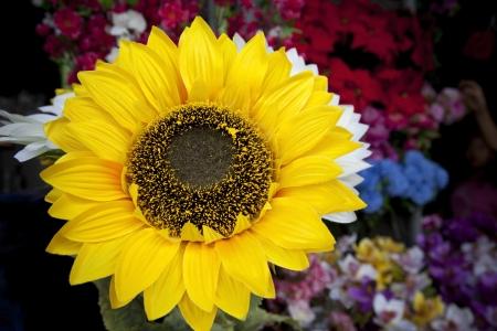 close up of artificial sun flower petal Stock Photo - 17162912
