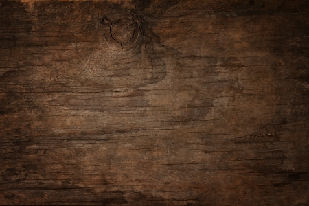 bark background: texture of bark wood use as natural background