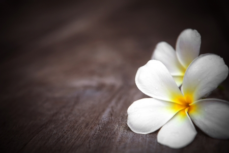 white frangipani flowers on wooden background with shallow depth of field photo