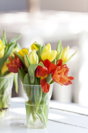 yellow and blssom tulip flower in a glass decorated on white table photo