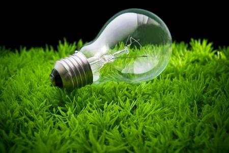 ligh: ligh bulb on green grass