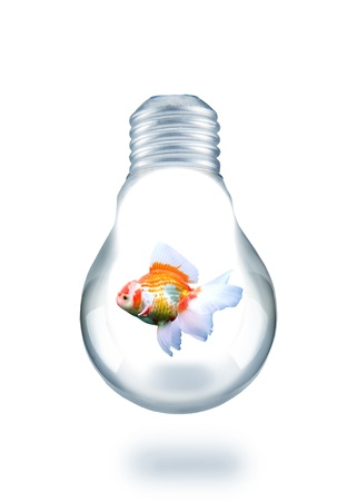 gold fish swiming in light bulb Stock Photo - 17505001