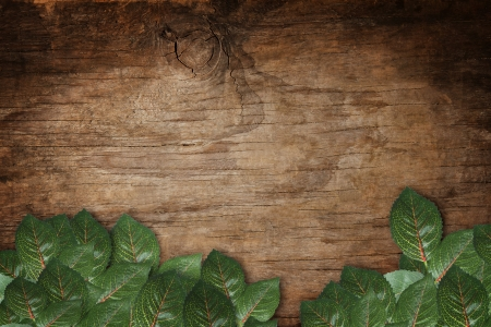 file of green leaves on wood texture background Stock Photo - 17594065
