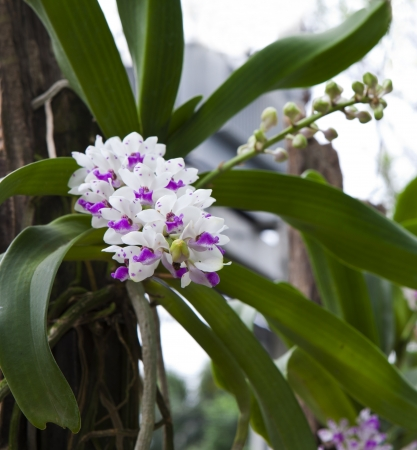 file of beautiful orchid flower in nature photo