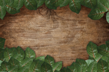 file of green leaves on wood texture background photo