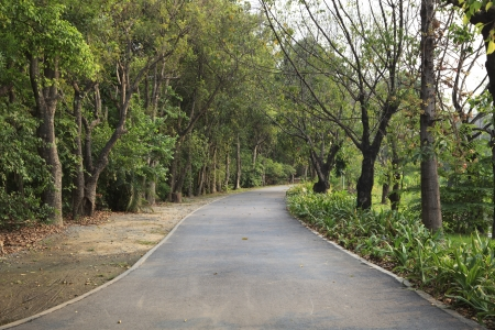 oxigen: asphalt way in the park  perspective to background Stock Photo