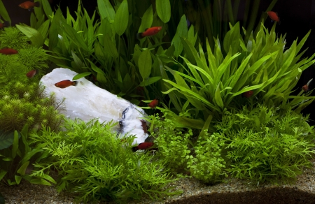 green plant in under water aquarium use for multipurpose Stock Photo - 18556213