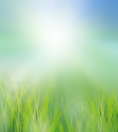 green field in morning light use for ntural background photo