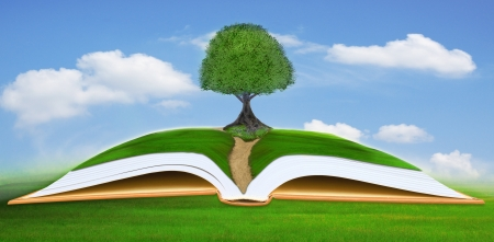 big tree on open book with blue sky background